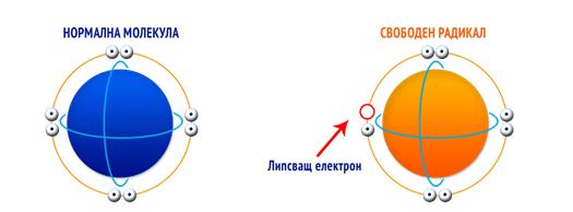 антиоксидатор - свободен радикал